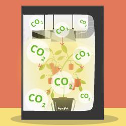 Влияние углекислого газа на растения