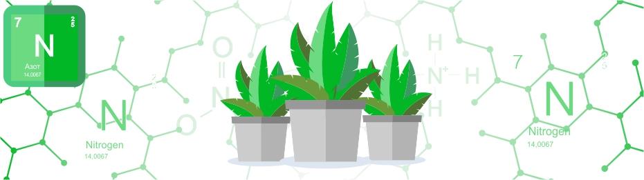 Роль азота в жизни растений
