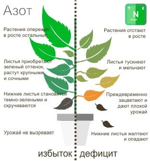 Признаки нехватки азота