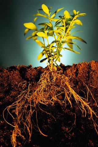 фото корни растений