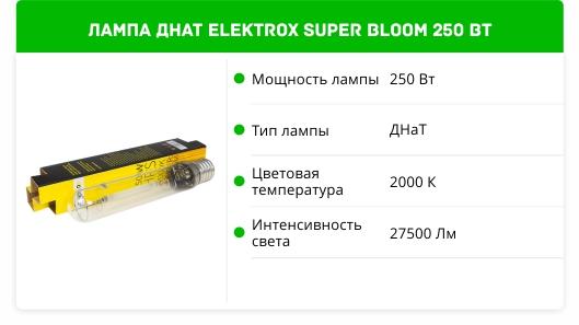 Elektrox SUPER BLOOM