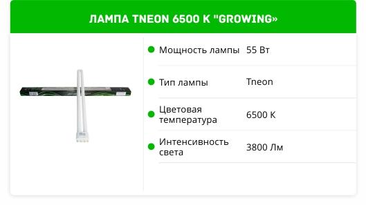 TNEON 6500 k growing