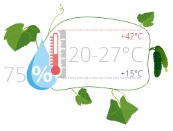 Влажность и температура для огурцов