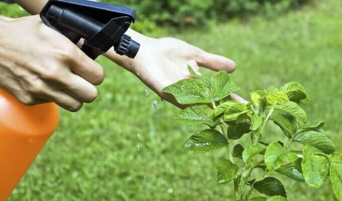 Как защитить растения от болезней