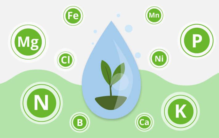 Макро и микроэлементы в жизни растений