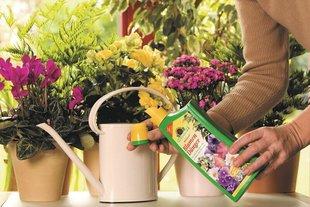 Лучшие удобрения для растений