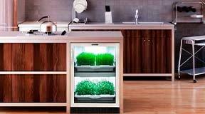 Стелс выращивание растений