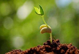 Виды и характеристики стимуляторов роста для домашних растений